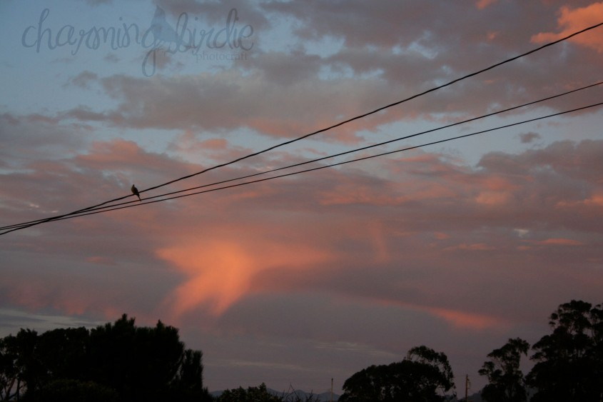 bird on wire sunset