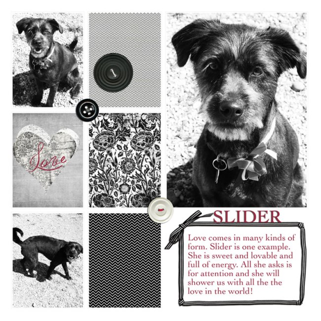 SLIDER-IN-BLACK-AND-WHITE